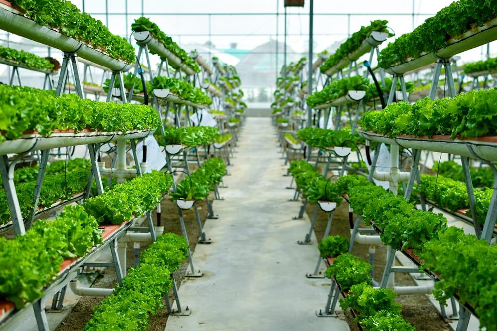 Vertical farming dehumidifiers